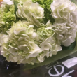 green and white hydrangea flowers